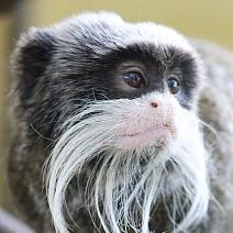 Photography at Shaldon Zoo